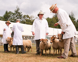 Sheep: Portland