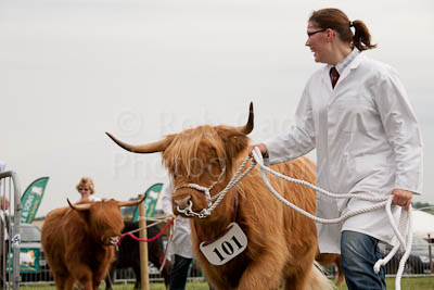 Highland Cattle at Blakesley Show 2011
